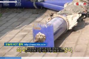 【韓国の猫ニュース】中国で鉄パイプにすっぽりハマってしまった子猫の救出活動