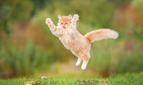 猫 好き イケメン 芸能人
