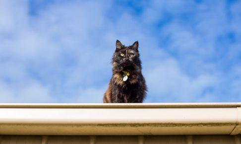 【振り返れば奴がいる】猫より愛をこめて、ゲロミサイルが投下された話