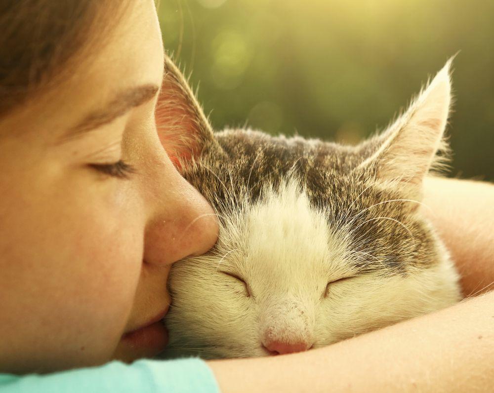 猫 予防接種 費用