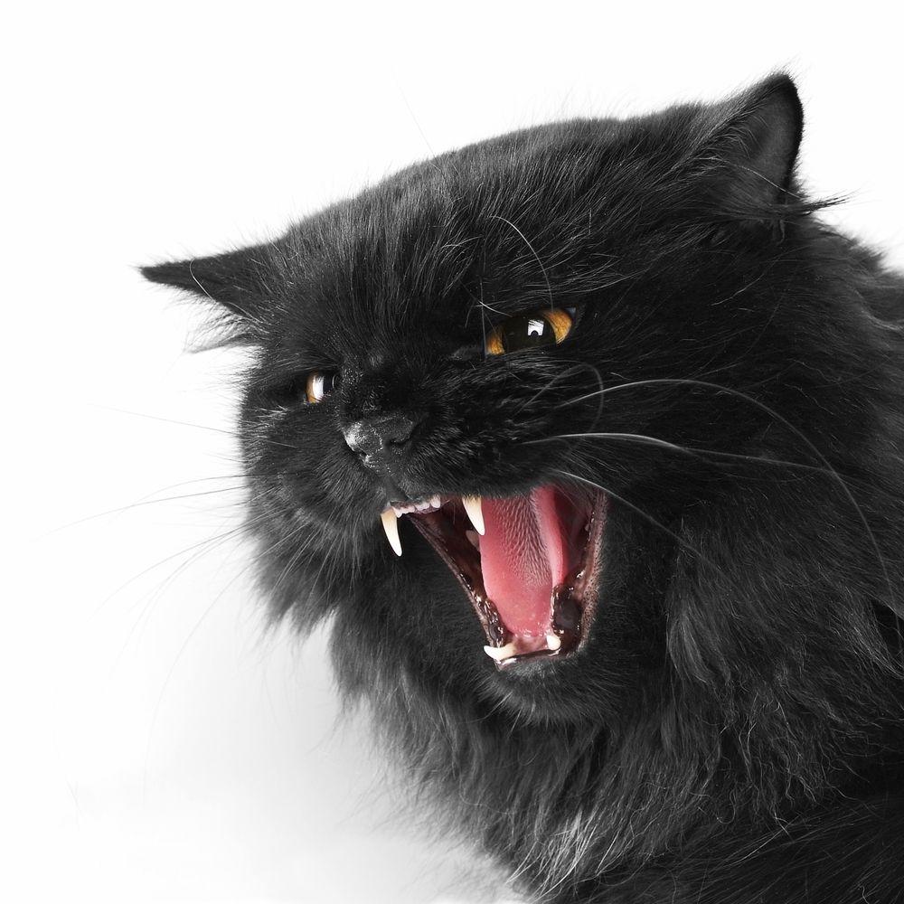 猫 頭突き 激しい