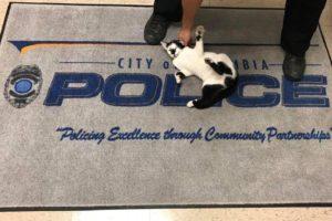【猫が警察を襲撃!】アメリカ・コロンビア警察、完全にお手上げ状態