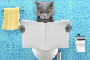 【猫の尿路結石】おしっこが出ない!尿道カテーテルの処置を受けた時の話|治療の経過や費用など