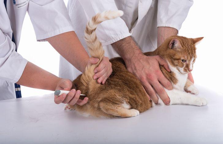 【猫の体調不良】喧嘩直後に発熱?いつもの元気がない時は病院へ|治療内容や治療費はどれぐらい?